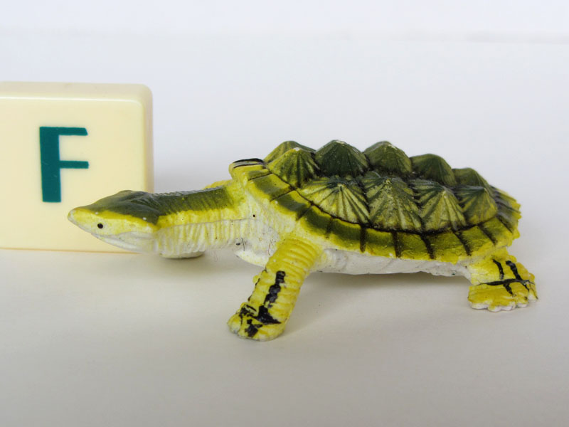 PEC turtles matamata1.jpg